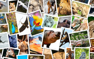 Q&U: Wild at Heart – The Animals We Wish We Could be and Why