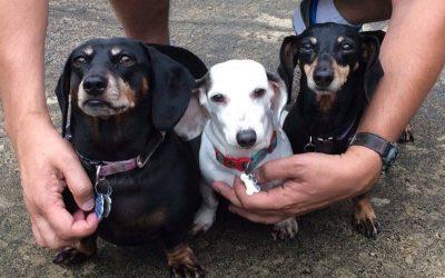 How Three Weiner Dogs Found a BUNdle of Love