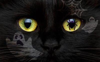 Q&U: Spooky… but True, A Halloween Special